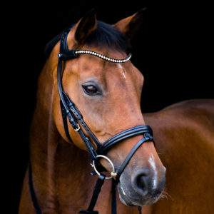 Horse Bridles and Bags