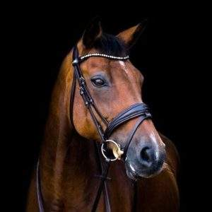 Bridles - Bridle Parts & Bridle Bags - SALE