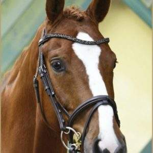 Stubben 2010 Magic Tack Bridle -SALE
