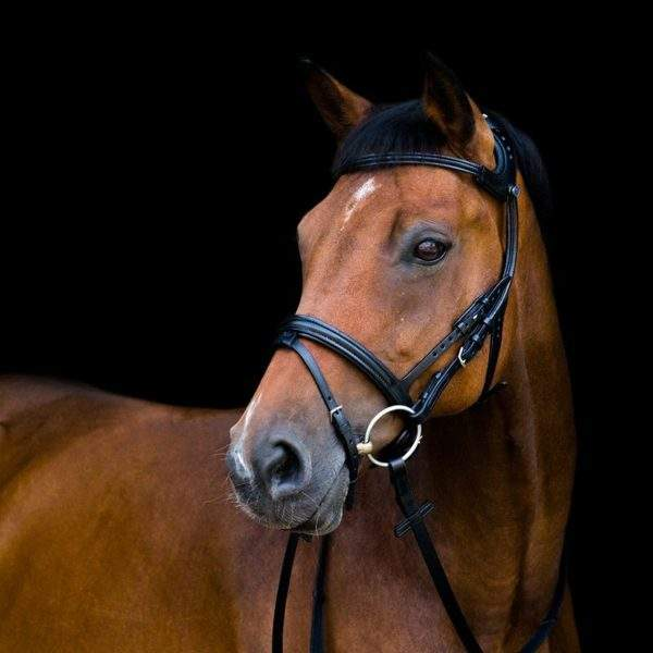 Stubben Freedom 2500 bridle - SALE