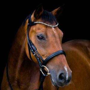 Stubben Freedom 2510 Magic Tack Bridle with 'Jet' inlay- SALE