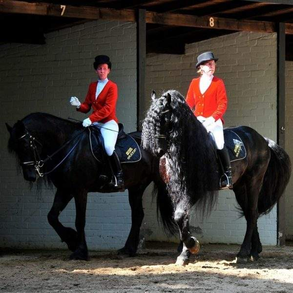 Stubben saddle cloth dressage velour