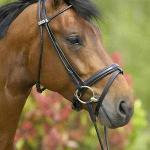 Stubben Carlow 4000 Rolled Bridle - SALE