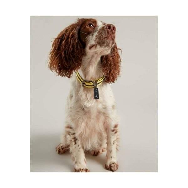 Joules Coastal Dog Collar
