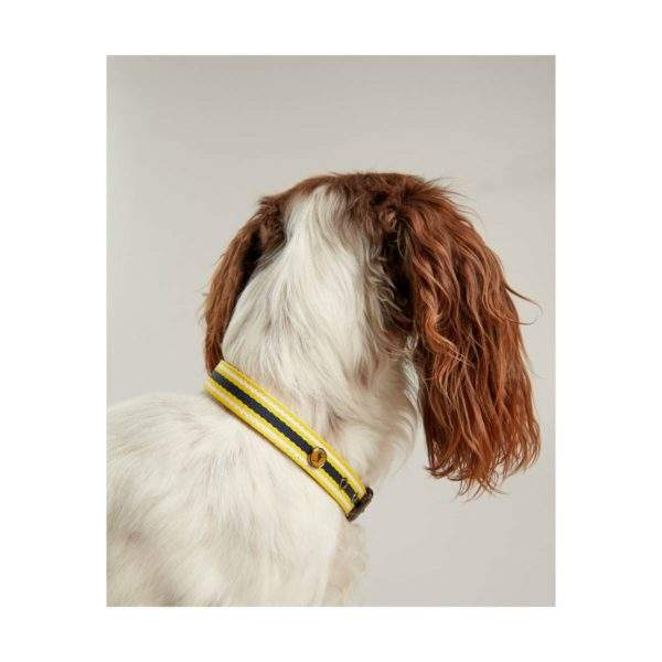 Joules Coastal Dog Collar - SALE