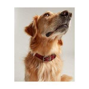 Joules Heritage Tweed Leather Collar