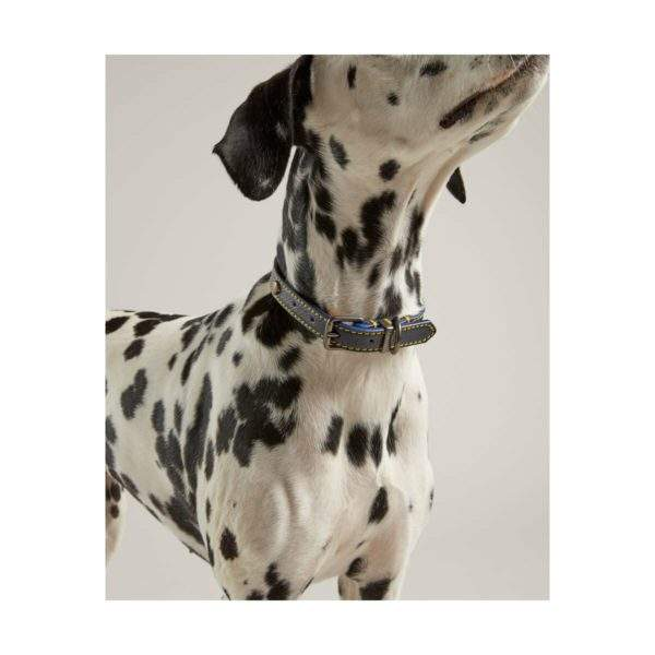 Joules Leather Dog Collar SALE