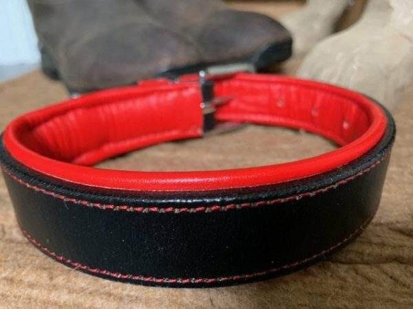 Elite Padded Dog Collar / Lead
