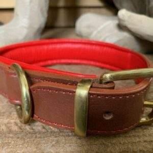 Elite Padded Dog Collar, plain lead