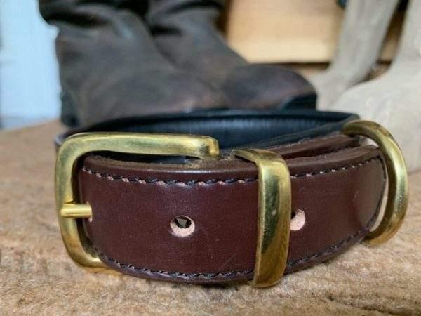 Elite Padded Dog Collar / Padded Dog Lead