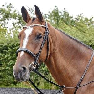 Whitaker Lynton Snaffle Bridle With 2 Browbands