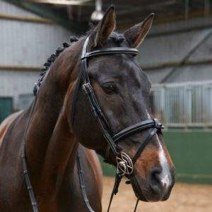 Whitaker Eastwood Raised Flash Bridle