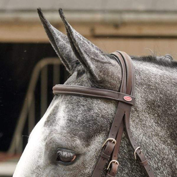Whitaker Ready To Ride Mexican Bridle