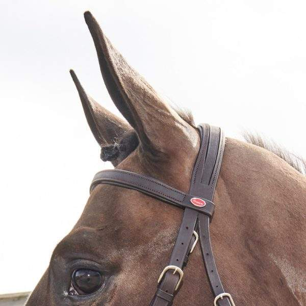 Whitaker Ready To Ride Snaffle Bridle