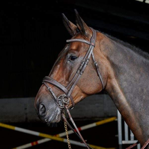 Whitaker Chicago Breathable Leather Bridle With Bling Browband