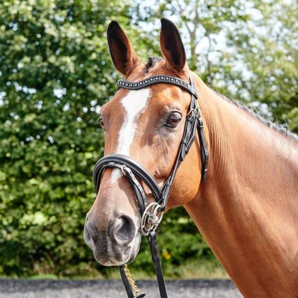 John Whitaker Lynton Flash Bridle With 2 Browbands
