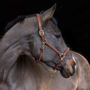 Whitaker Valencia Luxury Leather Headcollar