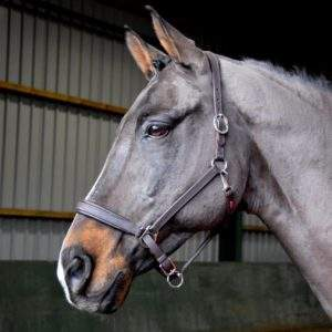 Whitaker Ready to Ride Leather Headcollar