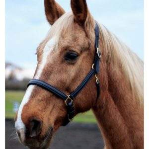Whitaker Oslo Soft Leather Headcollar