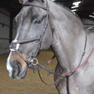 Whitaker Ready to Ride Martingale
