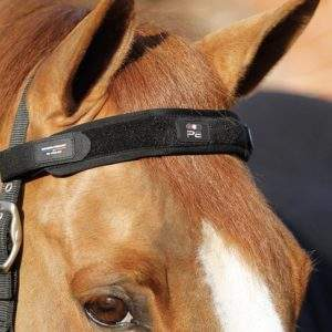 Premier Equine Magni-Teque Magnetic Browband