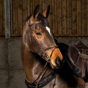 Whitaker Valencia Super Deluxe Leather Flash Bridle