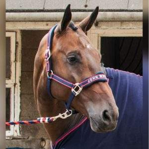 Whitaker Airflow Head Collar Set