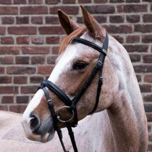 Stubben 1001 Waterford bridle