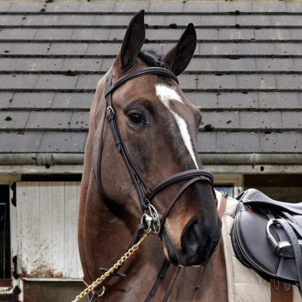 Whitaker Ready To Ride Leather Flash Bridle