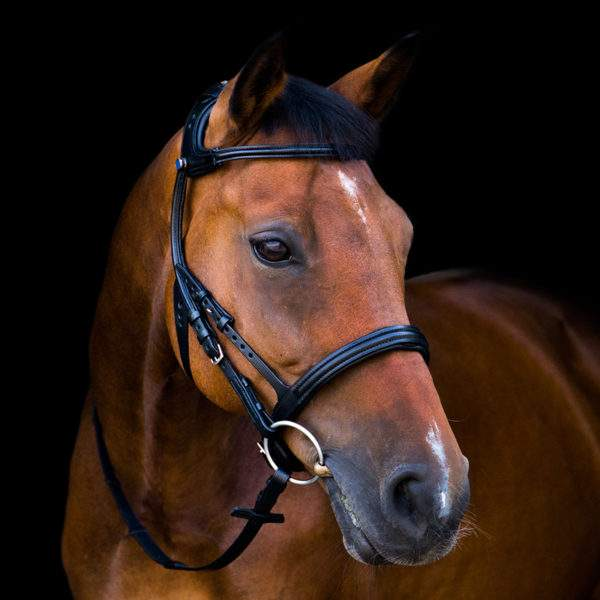 Stubben Freedom 2500 bridle (Trial available)
