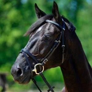 Stubben Tyrone 1200 Bridle - SALE