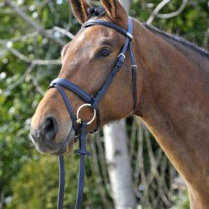 Stubben Waterford Headstall