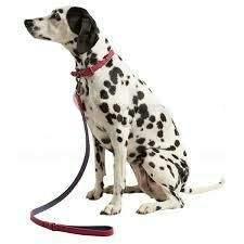 Dog Supplies & Accessories