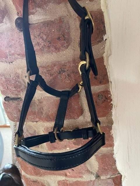 Rocking horse leather headcollar