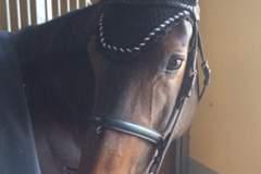 aobheann-mccabes-horse-belle-noire-pic2-h-400